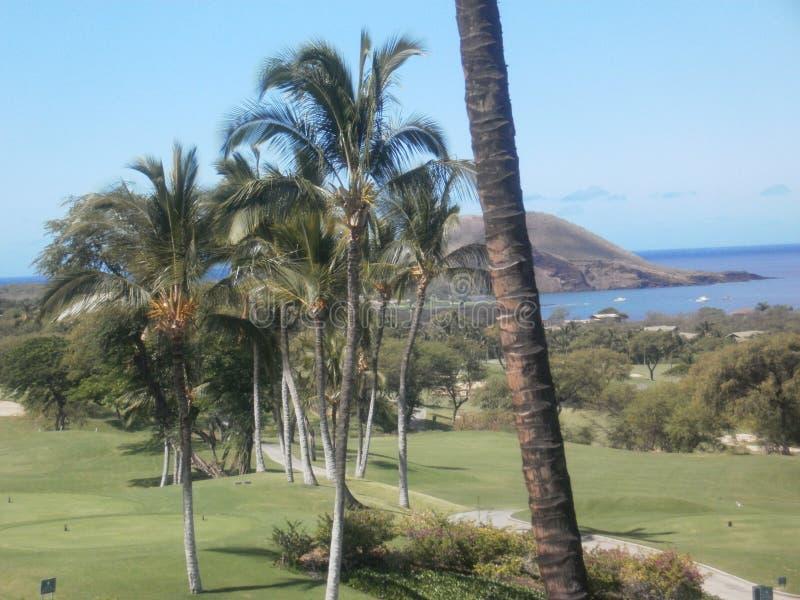 在高尔夫球场的棕榈树 免版税库存图片