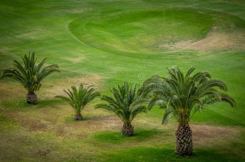 在高尔夫球场的Palmtrees 免版税库存照片