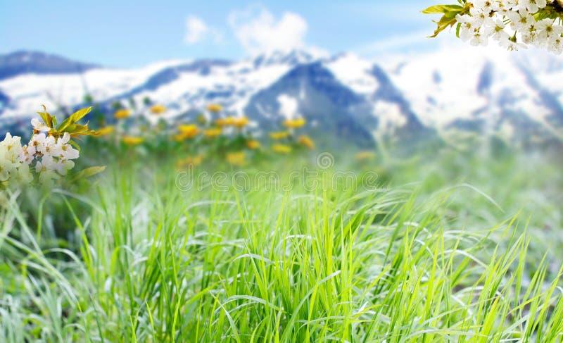 在高山全景前面的草甸 免版税库存照片