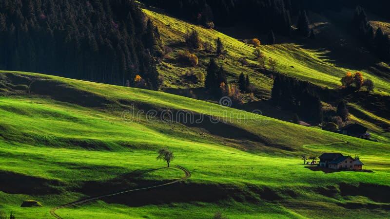 在高山小山,瑞士tusc绿色倾斜的美丽的坚硬阴影  库存照片