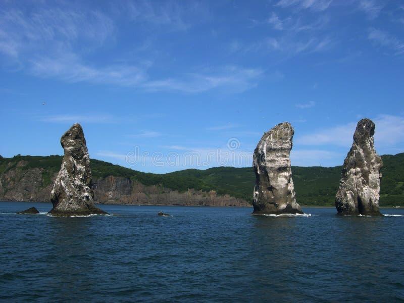 在高岩石的殖民地鸟在Avacha海湾 夏天 堪察加半岛,俄罗斯 免版税库存照片