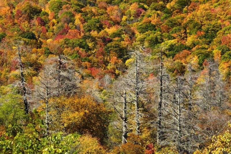 在高峰秋天颜色的Cherohala Skyway 库存照片