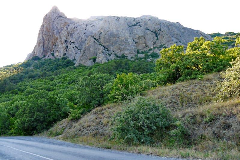 在高灰色峭壁的背景的路由绿色密集的森林围拢 免版税图库摄影