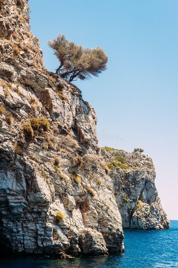 在高白色岩石的异常的树在土耳其在夏天 免版税库存照片