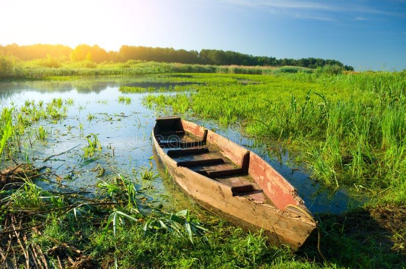 在高藤茎的小船 免版税库存照片