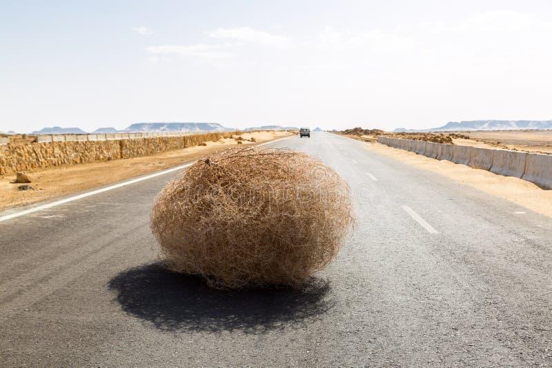 在高速公路的巨型风滚草有含沙沙丘的,在el拜哈里耶绿洲绿洲和Al Farafra绿洲之间,埃及的西部沙漠 免版税库存图片
