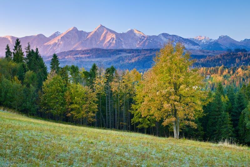 在高Tatra山,喀尔巴汗的美好的黎明 库存照片