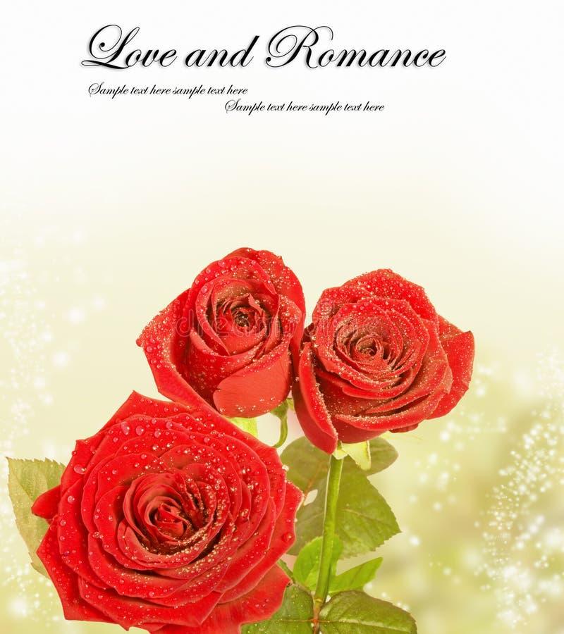 在魔术背景的美丽的红色玫瑰 免版税库存照片