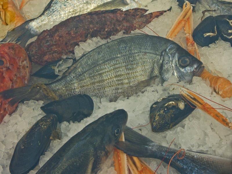 在鱼市上在杜布罗夫尼克 库存图片