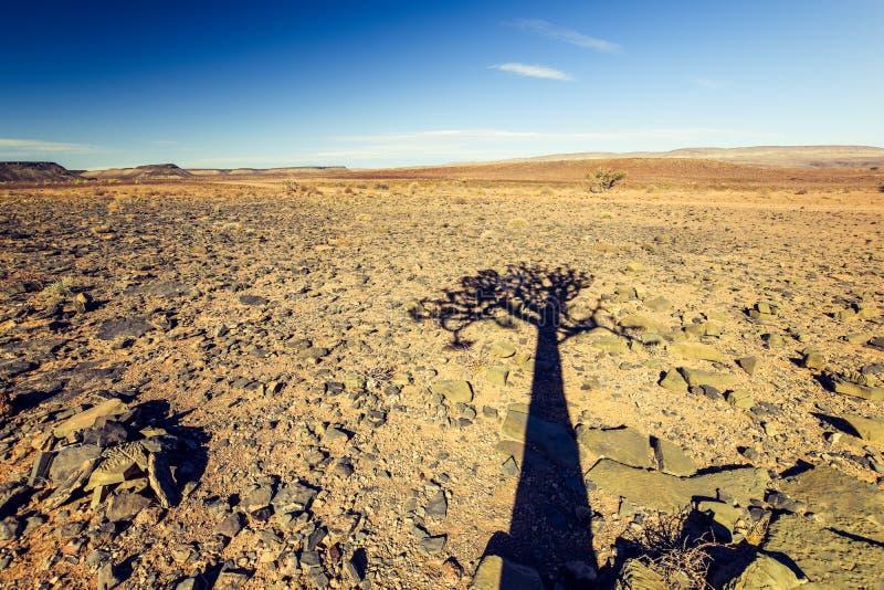 在鱼河峡谷自然公园遮蔽一美丽的颤抖树芦荟dichotoma的看法在纳米比亚,非洲 免版税库存照片