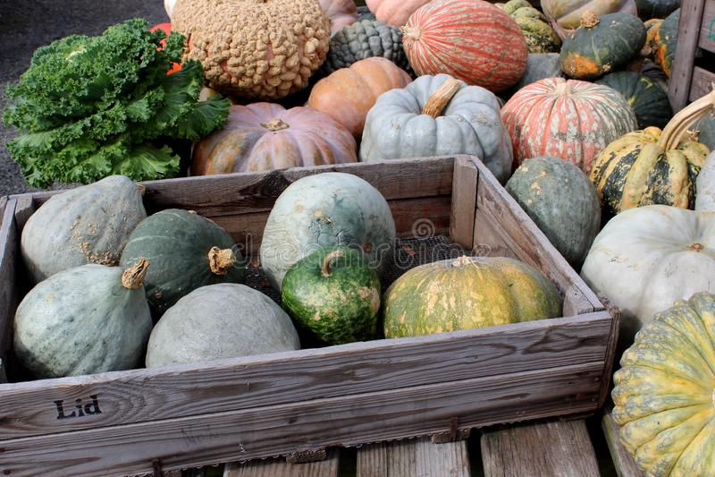 在鲜绿色和橙色五颜六色的南瓜和南瓜看的秋天的富饶秀丽在农夫市场上 免版税库存图片