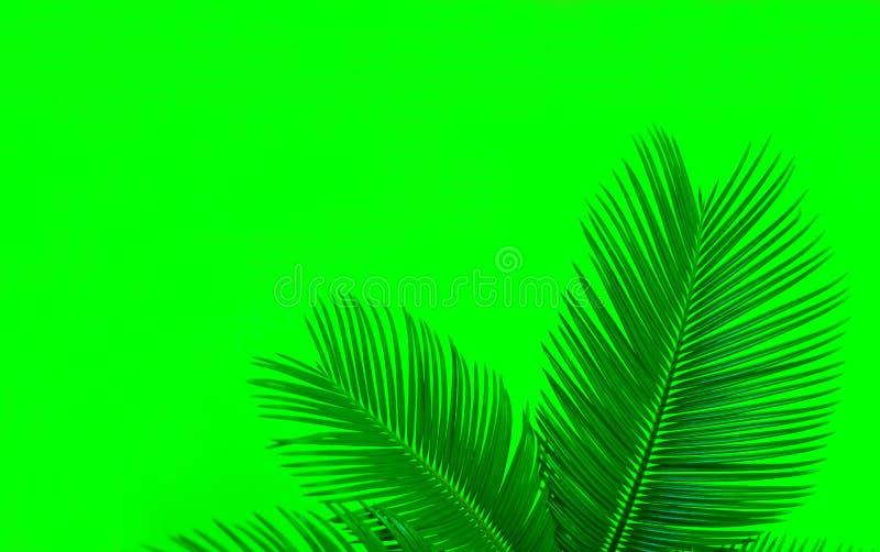 在鲜绿色的背景的热带棕榈叶 真正的热带叶子创造性的布局在绿色背景的 E 库存图片