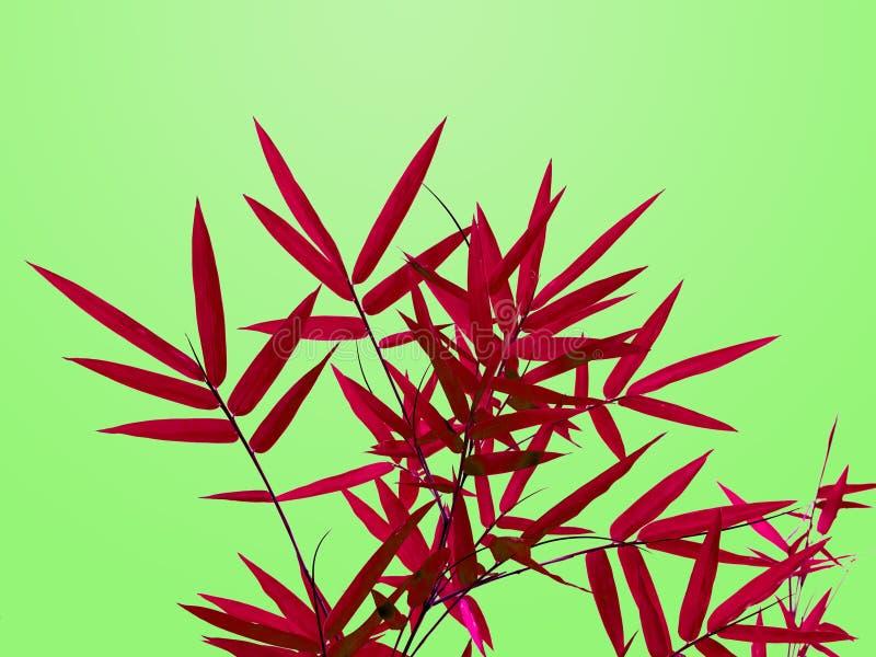 在鲜绿色的背景中隔绝的红色竹子叶子 免版税库存照片