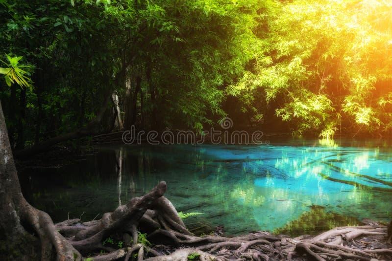 在鲜绿色水池的蓝色水池是未看见的水池在美洲红树森林里在K 库存图片