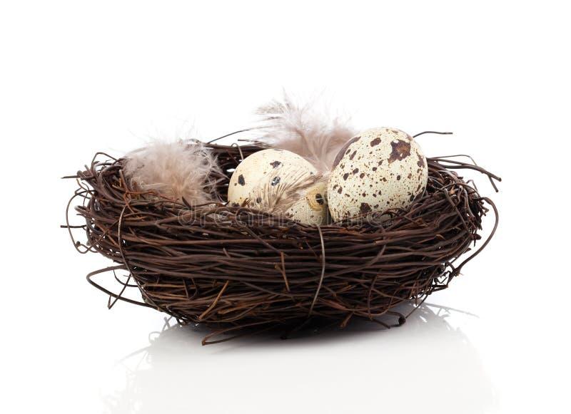在鸟巢的鹌鹑蛋 库存图片