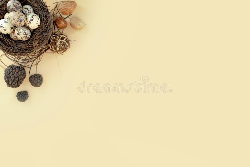 在鸟巢顶视图的简单的鹌鹑蛋 免版税库存照片