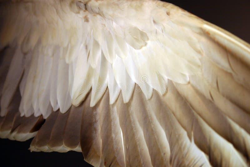 在鸟羽毛翼之下的天使 免版税库存照片