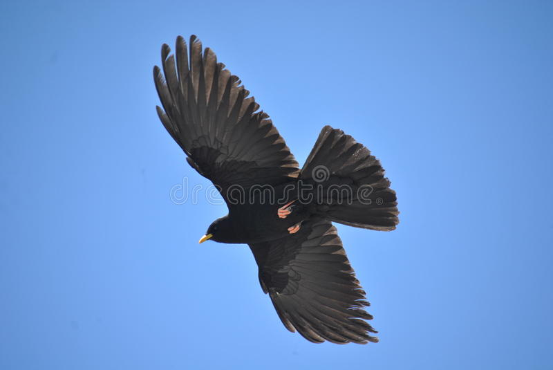 在鸟黑暗的飞行海洋之上开张海鸥翼 库存照片
