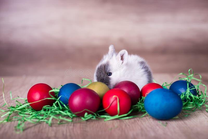 在鸡蛋后的复活节兔子 库存图片
