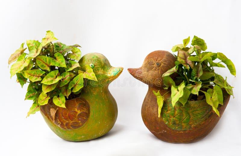 在鸭子花瓶的树 库存图片