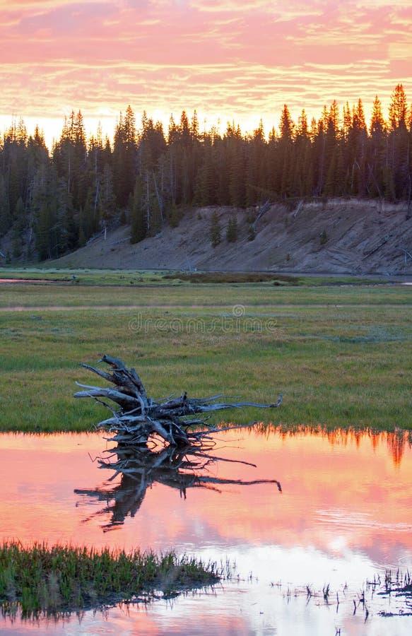在鹈鹕小河的桃红色和橙色日出cloudscape在黄石国家公园美国 免版税库存图片