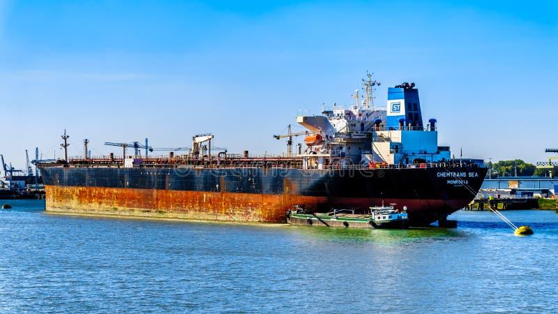 在鹿特丹,荷兰树荫处的海洋船  免版税库存照片