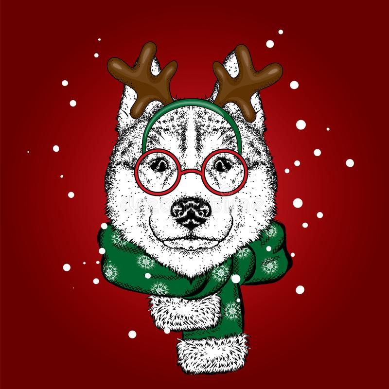 在鹿衣服和围巾的一条美丽的狗 antioch 也corel凹道例证向量 在衣裳和辅助部件的纯血统小狗 爱斯基摩或狼 向量例证