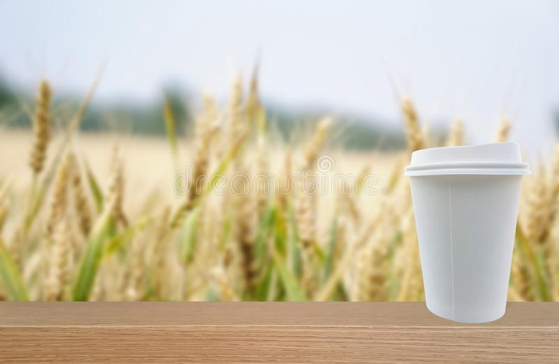 在麦地前面被安置的生物PLA纸杯 免版税库存图片
