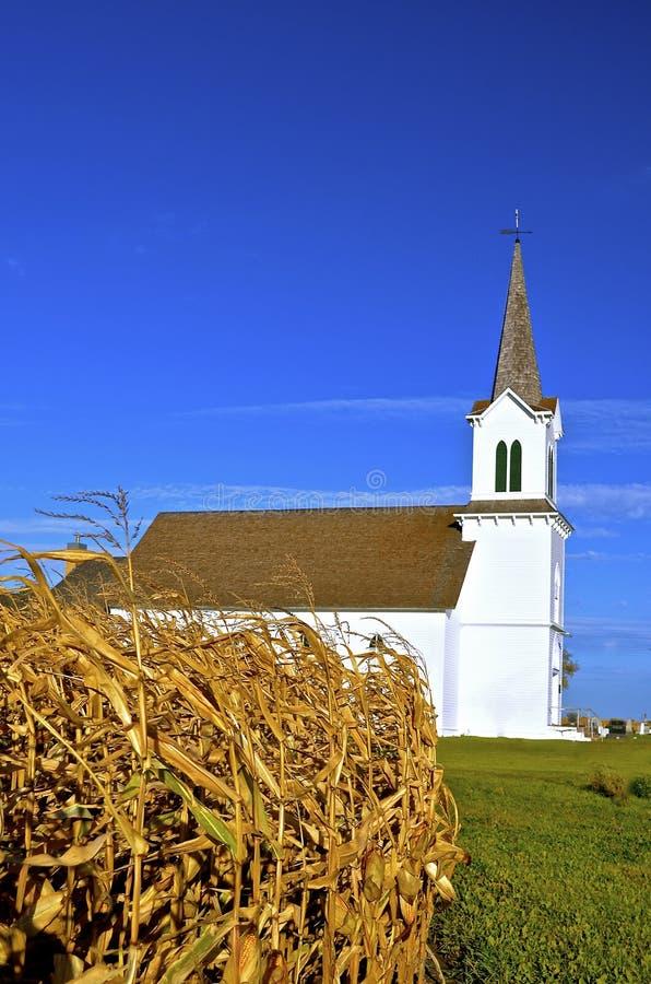 在麦地后的白色国家白色 库存照片