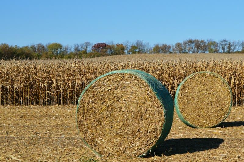 在麦地的干草捆 库存照片