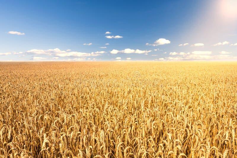 在麦地的阳光 库存照片