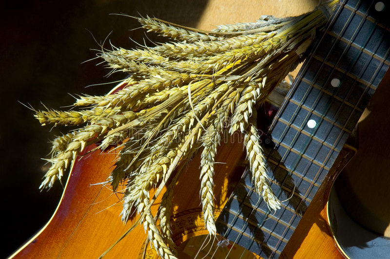 在麦子的吉他 库存照片