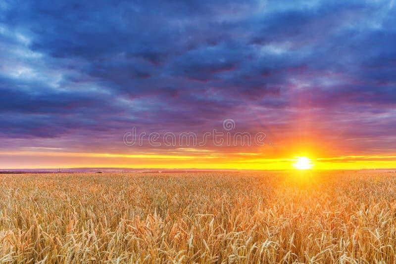 在麦田上的日落 库存图片