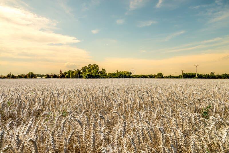 在麦田和教会的美好和温暖的日落 库存图片