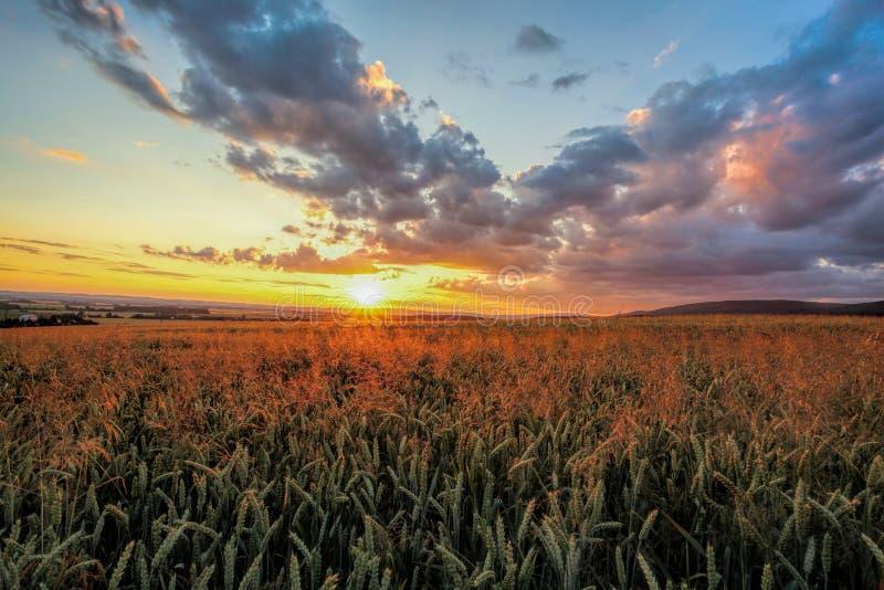在麦田的五颜六色的日落 图库摄影