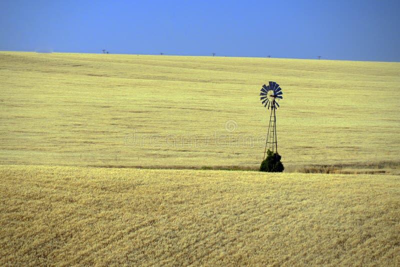 在麦田,东华盛顿的孤立风车 免版税库存照片