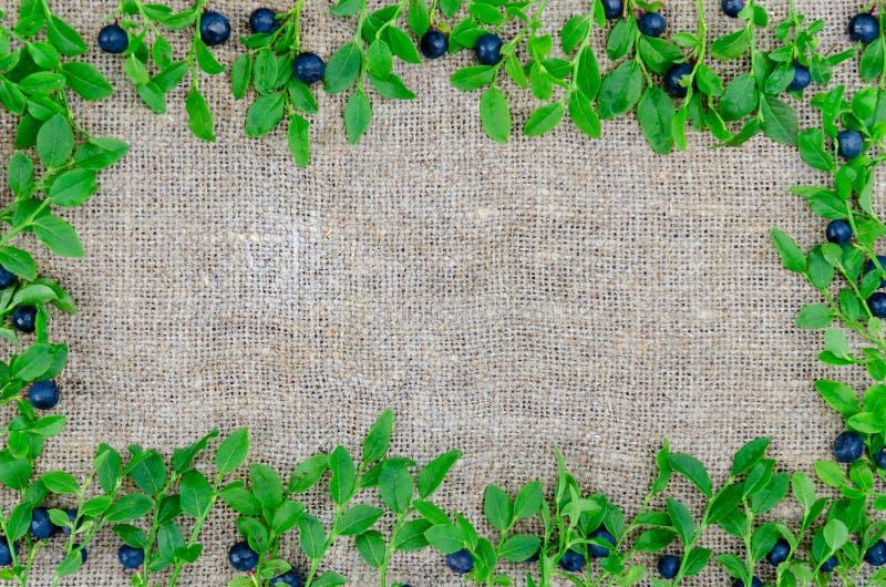 在麻袋布背景的新鲜的有机蓝莓 r 健康和节食的吃的概念 库存照片