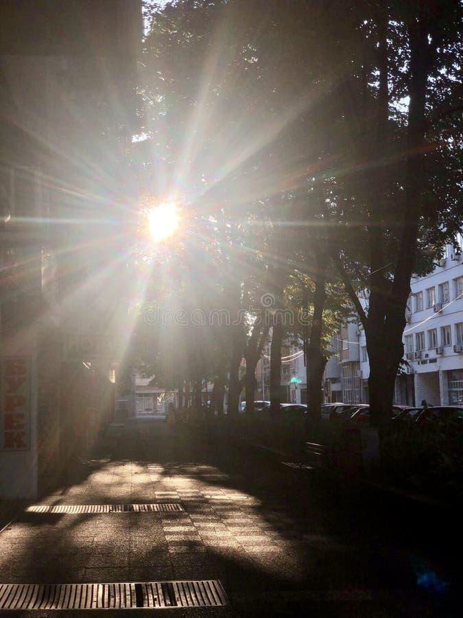 在黄昏的太阳焕发 图库摄影
