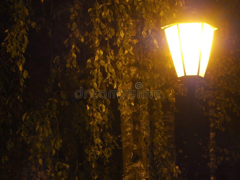 在黄昏的街灯 库存照片