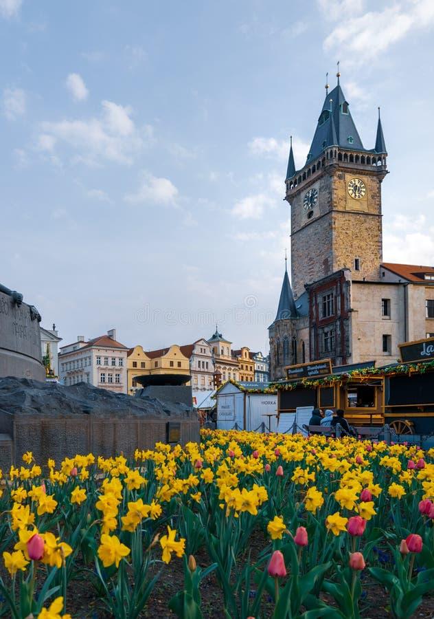 在黄水仙围拢的扬・胡斯纪念碑后的布拉格天文学时钟春天中 免版税库存图片