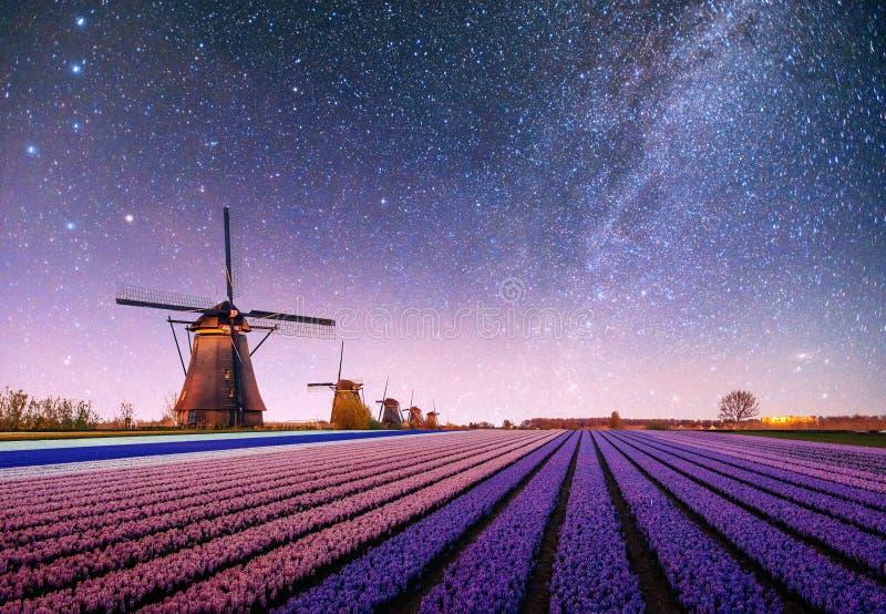 在黄水仙的领域的夜 意想不到的满天星斗的天空和银河 免版税库存图片