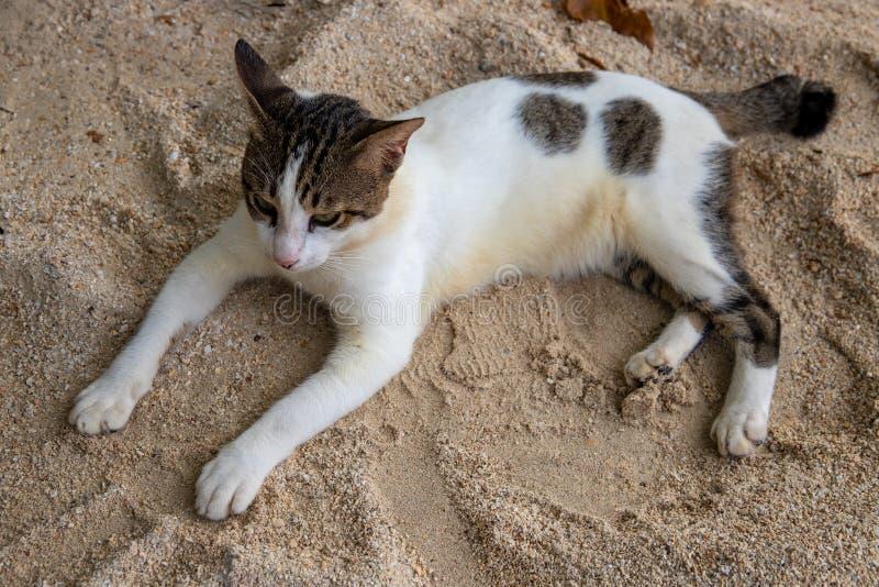 在黄沙海滩的白色和恶意嘘声 与宠物的夏天旅行 家畜在度假 免版税库存照片