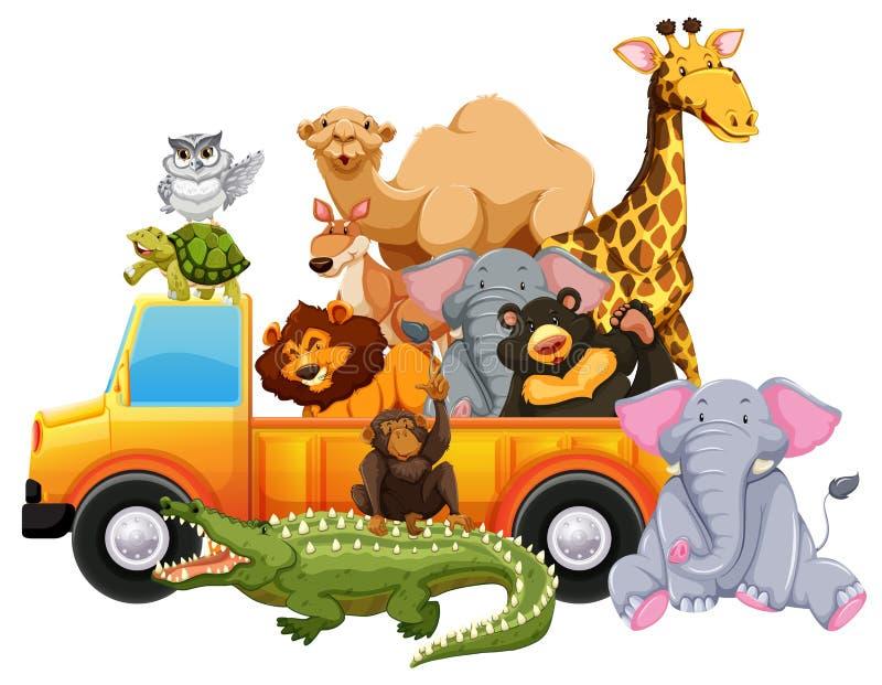 在黄色卡车的野生动物 皇族释放例证