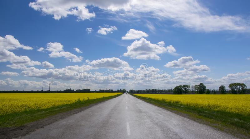 在黄色开花的油菜籽领域之间的空的柏油路在农村风景在与白色蓬松云彩的蓝天下 免版税库存照片