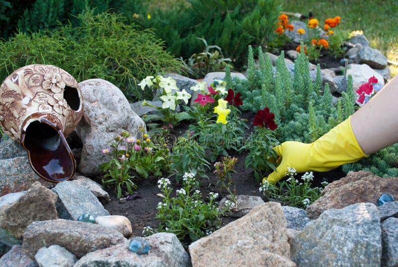 在黄色橡胶手套的手拿着花树苗,在地面地面上的春天工作,松开种植 库存照片
