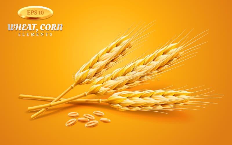 在黄色背景或者大麦隔绝的详细的麦子耳朵、燕麦 自然成份元素 健康食物或 向量例证