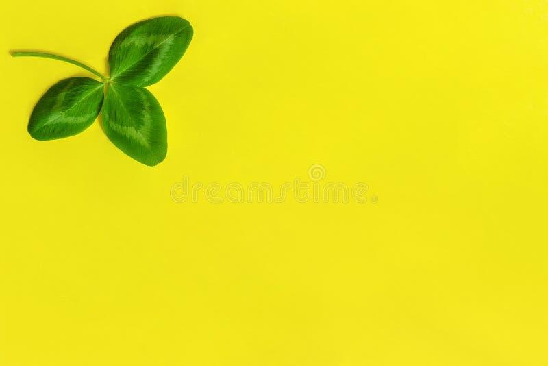 在黄色背景的一片自然三叶草叶子 StPatrick ';s天概念 顶视图拷贝空间 免版税库存图片