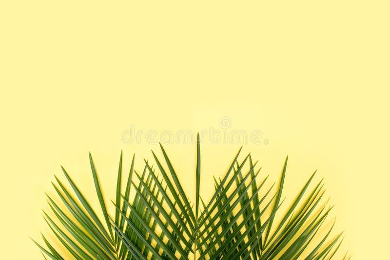在黄色背景的热带棕榈叶 库存图片