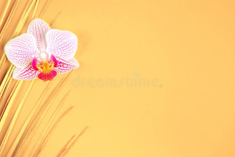 在黄色背景的金黄棕榈叶和兰花花 库存照片