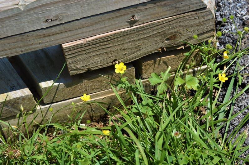 在黄色花和草旁边的长方形木粱 图库摄影